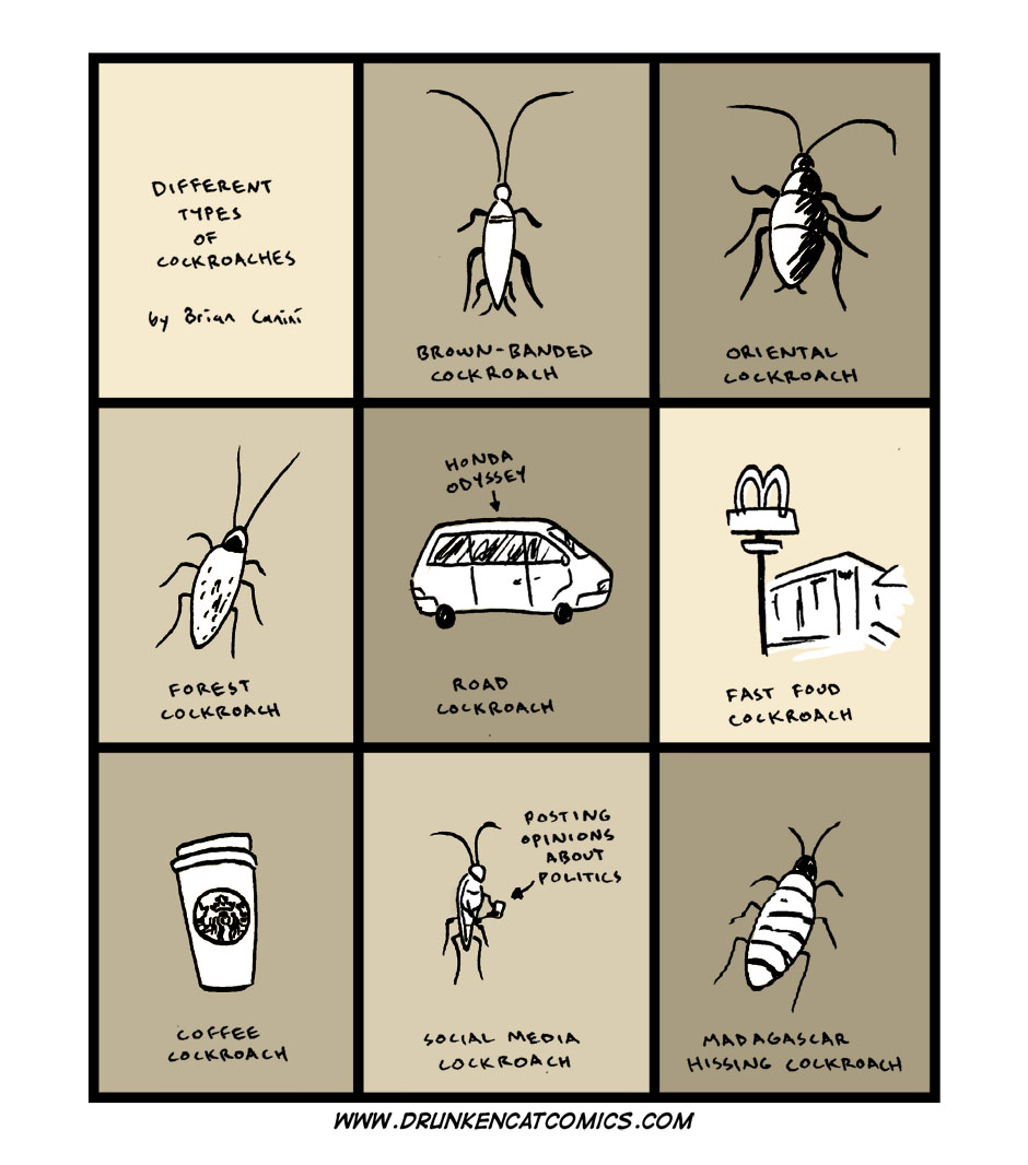 Different Types of Cockroaches